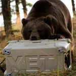 Yeti Tundra Coolers Review